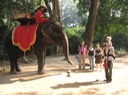 close encounters with the elephants